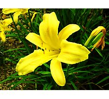 yellow suprise Photographic Print