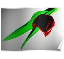 Single Red Tulip Poster