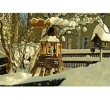 Winter in Front Garden Photographic Print