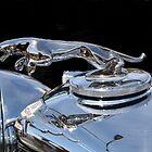 Jaguar by Marie Brown ©
