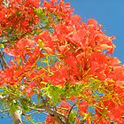 Flamboyant Tree Against Blue Sky by Lorna81