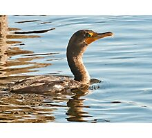 Double-crested Cormorant - Idaho Photographic Print
