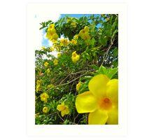 Allamanda Hedge - Grenada, Caribbean Art Print