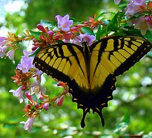 Summertime Fun Butterfly by BLemley