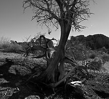 Winter in Joshua Tree by Angel LaCanfora