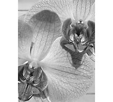 Alien Orchid v.4 - Black & White Photographic Print