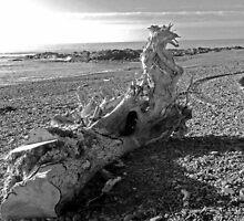 Dragon Driftwood by sarnia2