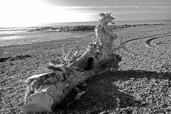 Dragon Driftwood by sarnia2