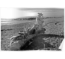 Dragon Driftwood Poster