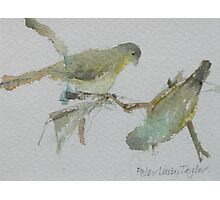 Green Finches Photographic Print