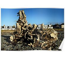 Dragon Driftwood -colour Poster