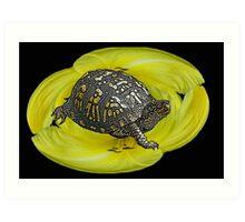 Box Turtle on Lily Art Print