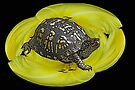 Box Turtle on Lily by MotherNature