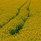 Christie: Yellow River live by Brown Sugar . Views (401) .  Favorited by (3)Thank you ! was featured in Monochrome in Color, by © Andrzej Goszcz,M.D. Ph.D