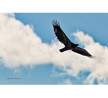 Golden Eagle 2- Wings outspread. Photographic Print