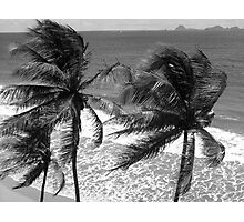 Breeze Through Palms, Waves Like Lace Photographic Print