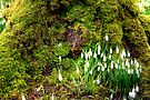 A Sign of Early Spring by Christine Smith