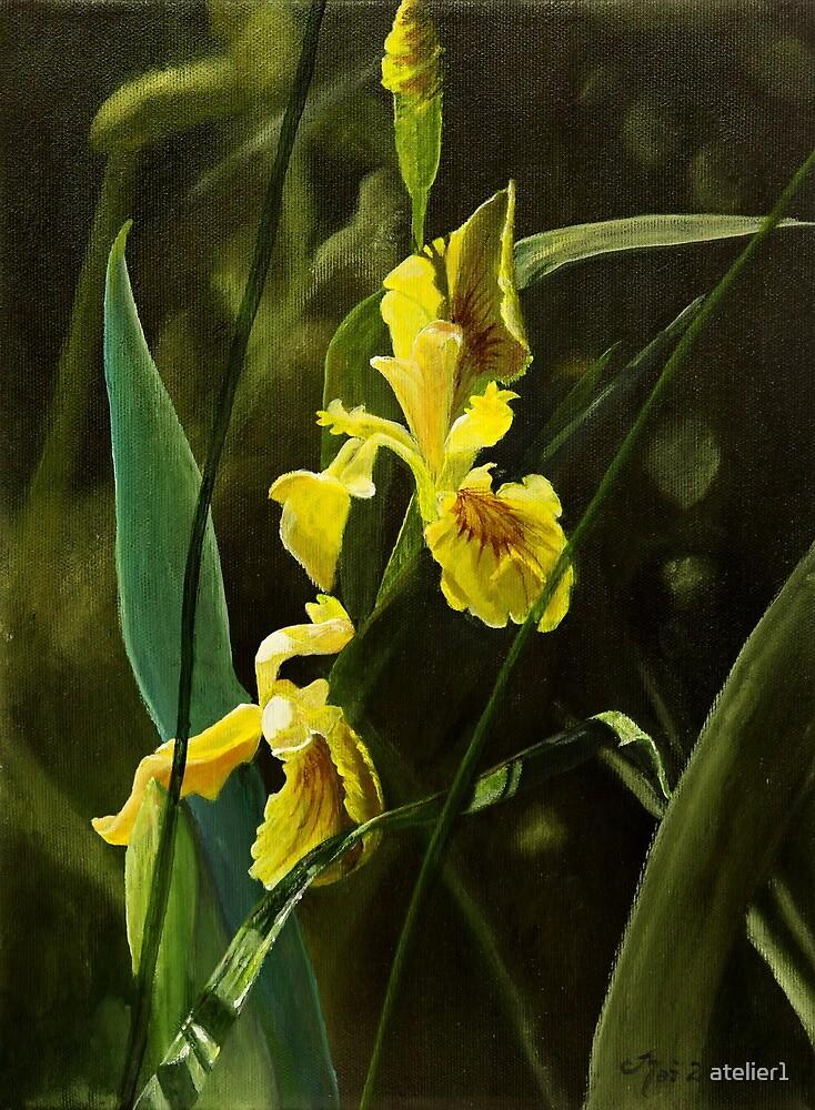 Yellow Iris by atelier1