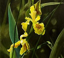 Yellow Iris by atelier1
