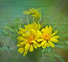 Yellow Daisy by BoB Davis
