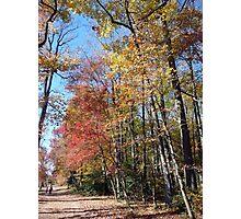 A walk in Buddy Attick Park, Greenbelt Photographic Print