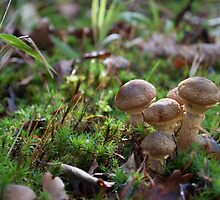 Roundheads by Ron117