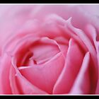 Rose by aruni
