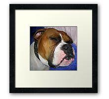 Even Tough Dogs Like Soft Pillows Framed Print