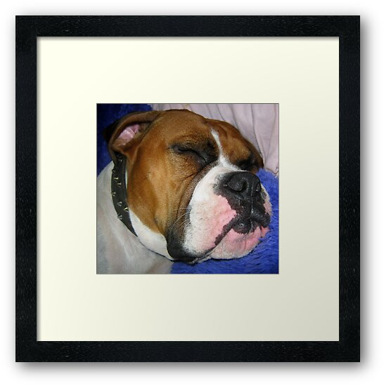 Even Tough Dogs Like Soft Pillows by Vanessa Barklay