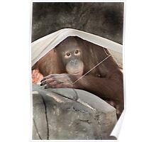 """""""Sun Shade"""" - an orangutan creates shade Poster"""