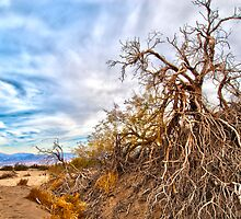 Tree struggling for life in the desert by Greg Hunter