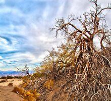 Tree struggling for life in the desert by Greg Hunter