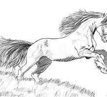 Horse by marokoshi