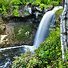 { minnehaha falls- with birch trees } by Brooke Reynolds