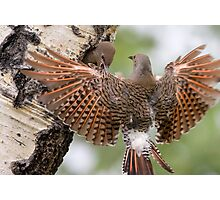Flicker Breakfast Photographic Print
