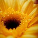 yellow rays of life by mirissa