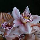 Orchid Garnish by Carolyn Staut