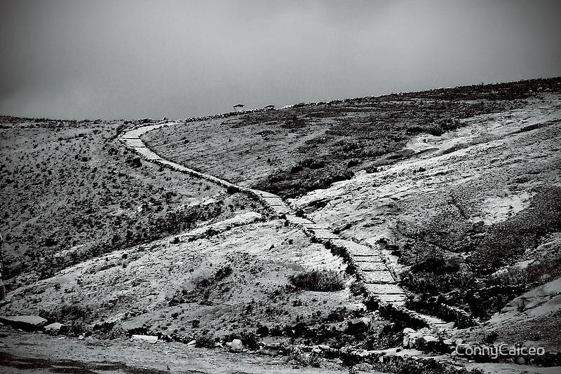 Camino en Isla del Sol by Constanza Caiceo