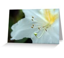 Rhododendrum Magregoriae Greeting Card