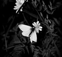 Wood White Monochrome by FakeFate