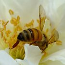 Too Bee or Not Too Bee That is the Question? by Gabrielle  Lees