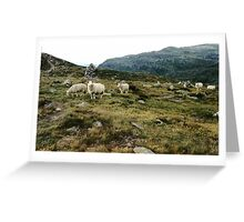 Sheep Grazing In The Mountains Greeting Card