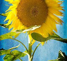 { sunflower blue} by Brooke Reynolds