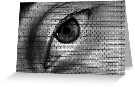 The Look @ Brick Wall by csouzas
