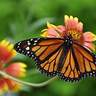 The Queen has landed - Monarch by Poete100