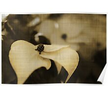 Dogwood - Sepia Poster
