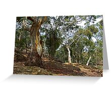 Stieglitz Bushland Greeting Card