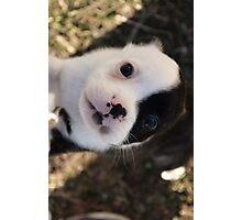 Puppy Love.2 Photographic Print