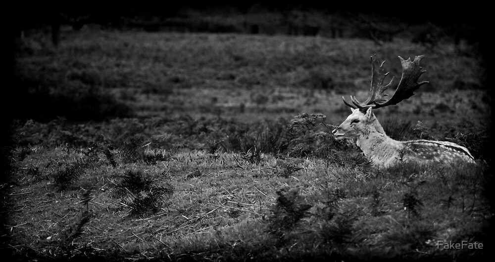 Richmond Park Fallow Deer by FakeFate