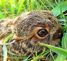 baby bunny by Peta Hurley-Hill